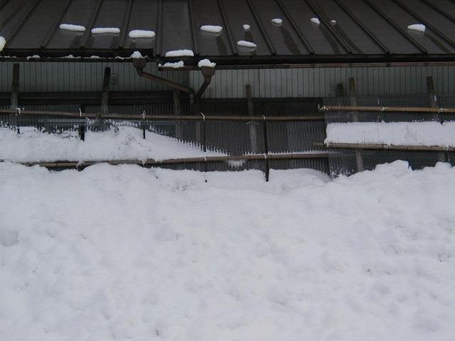 屋根雪が結構たまります