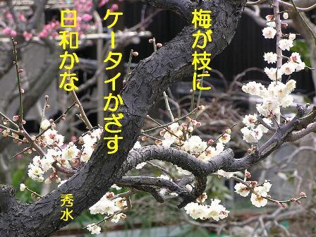 SD梅が枝