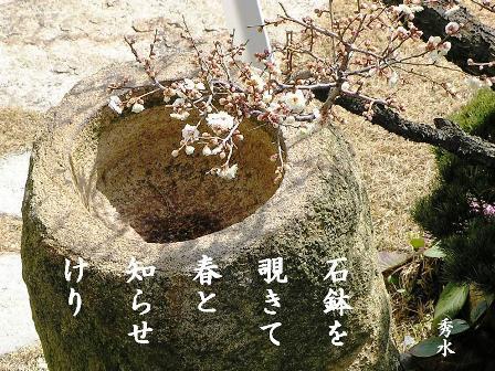 SD白梅と石鉢