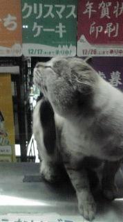 ゴミ箱の上の猫