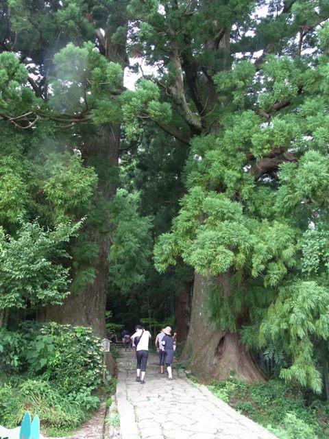 樹齢ウン百年の杉の木に迎えられ…