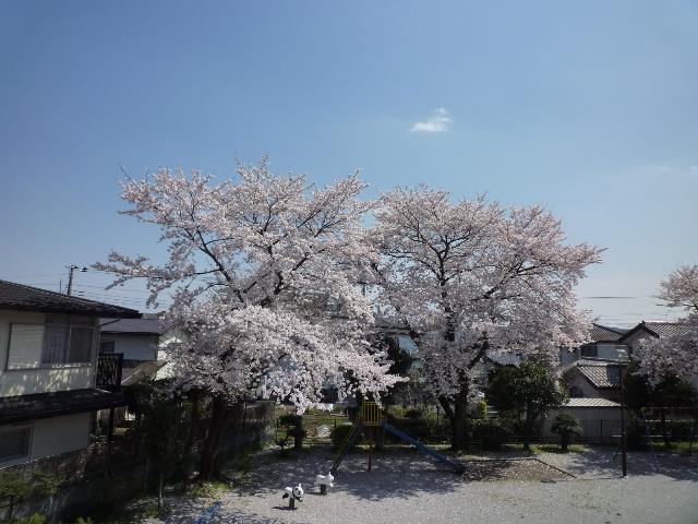 ベランダからの風景~春~