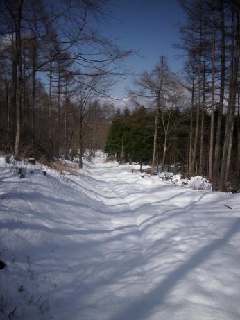 雪トレイル