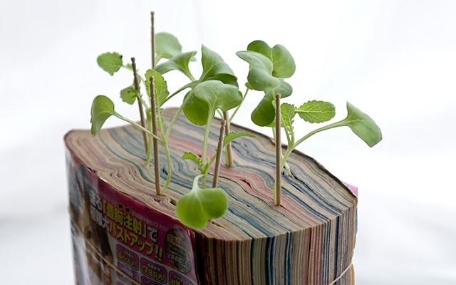 Manga farming