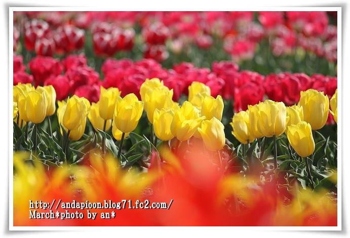 20110329_4901.jpg