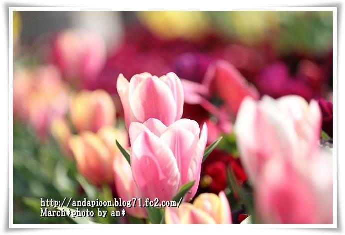 20110331_5418.jpg