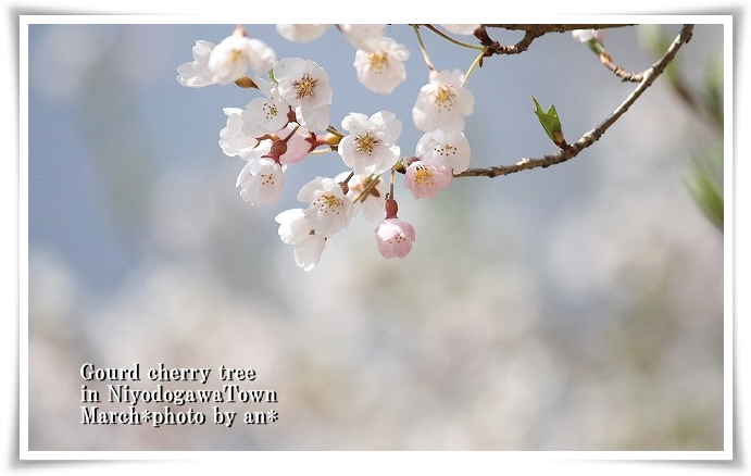 20110409_7033.jpg