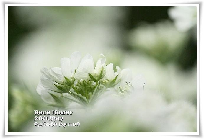 20110513_2743.jpg