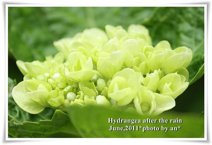 20110608_4591.jpg