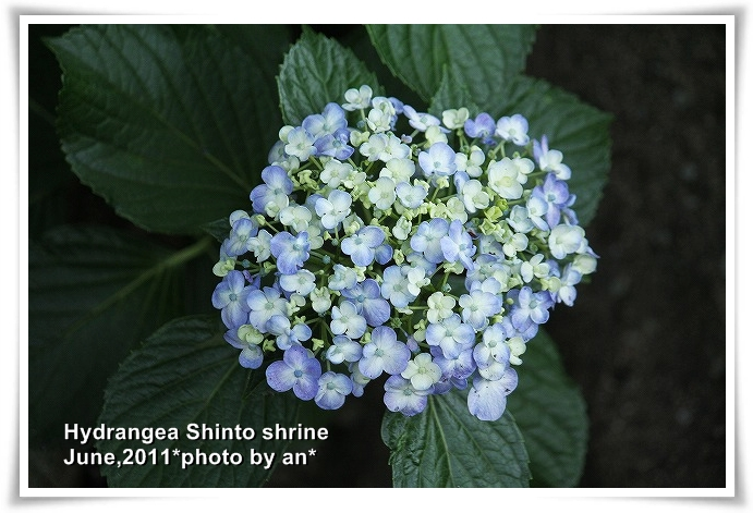 20110609_4663.jpg
