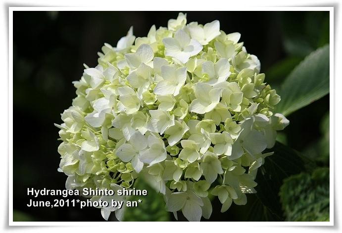 20110609_4708.jpg