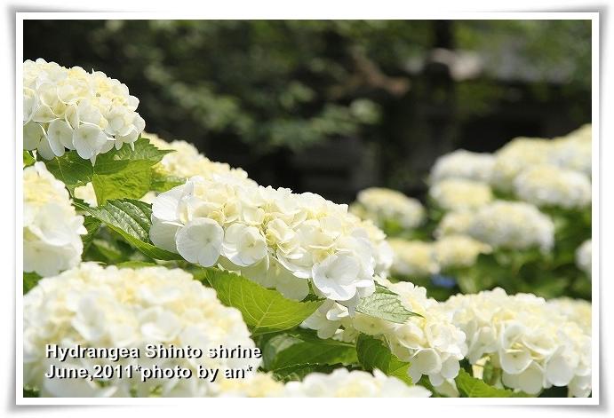 20110609_6036.jpg