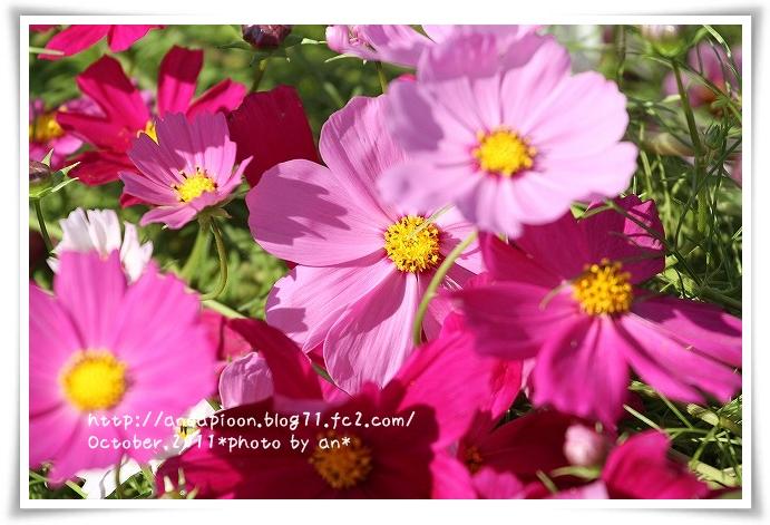 20111016_2872.jpg