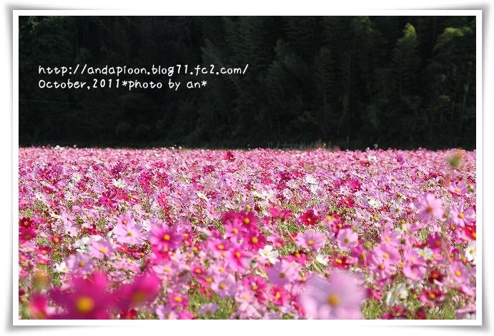 20111024_4394.jpg