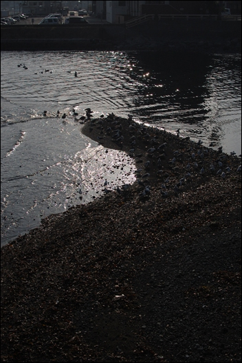 カモメの海