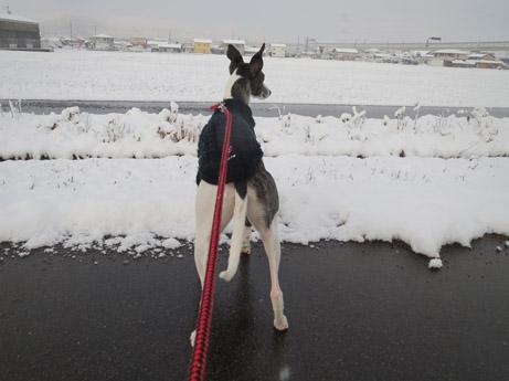 2013 2 23雪の中の散歩1