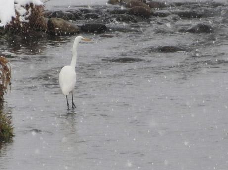 2013 2 23雪の中の散歩4
