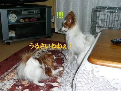 b201105129.jpg