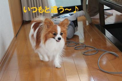 b201105145.jpg