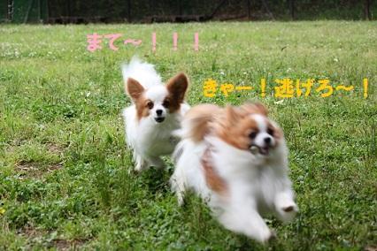 b2011061214.jpg