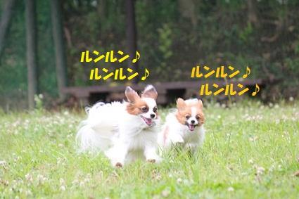 b2011061312.jpg