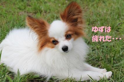 b2011062411.jpg
