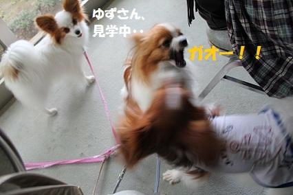 b2011062822.jpg