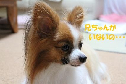 b201107291.jpg
