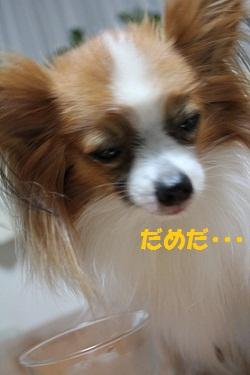 b201108036.jpg