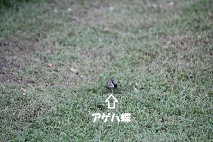 b2011082927.jpg