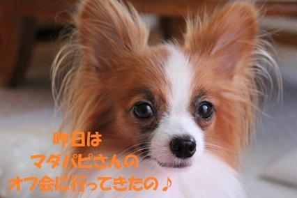 b201110101.jpg