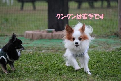 b2011110316.jpg