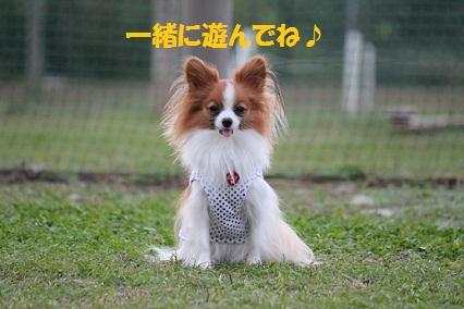 b2011110319.jpg