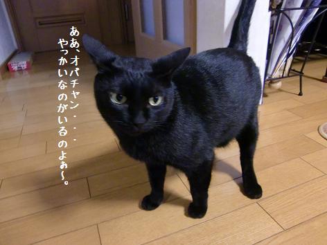 CIMG6324.jpg