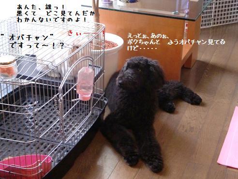 CIMG7069.jpg
