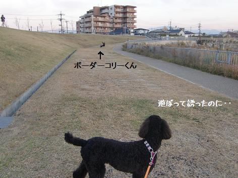 CIMG7721.jpg
