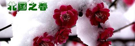 100218 北国の春1