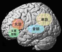 100320 脳