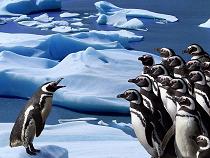 100407 ペンギン