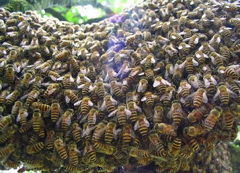 100409 bee2