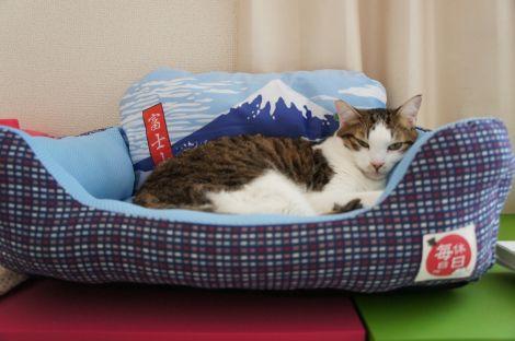 富士山を背負うオトコ