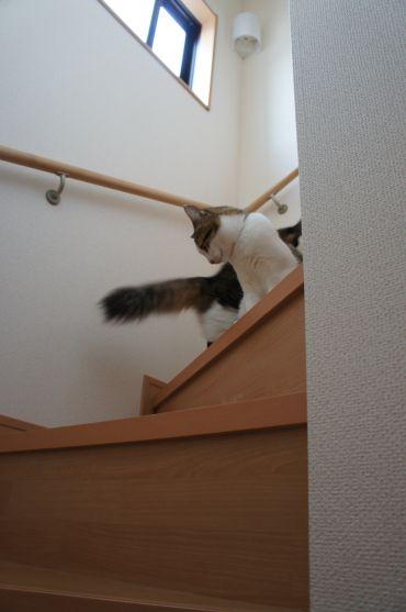 猫の子一匹