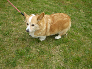 2011_0425_犬