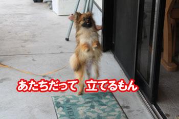 2011_0504_ジャンピングゆず