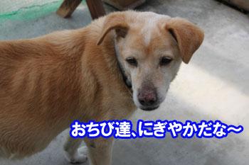 2011_0504_青