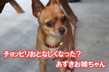 2011_0504_あずきお姉ちゃん