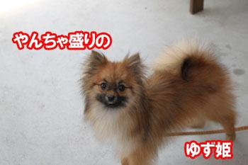 2011_0504_ゆず