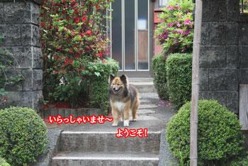 2011_0509_出迎え杏