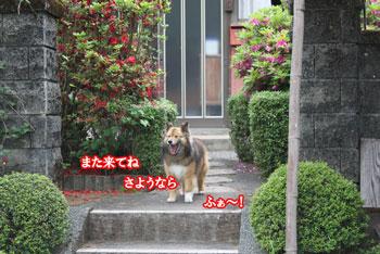 2011_0509_見送り杏