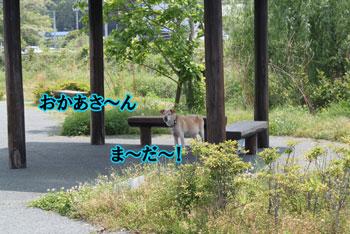 2011_0519_ま~だ~